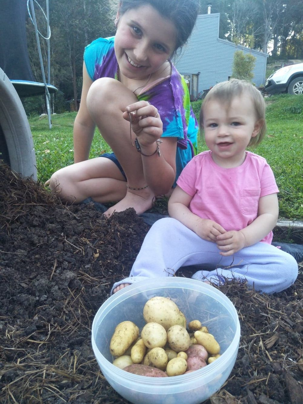 potatoes grown with vermicompost